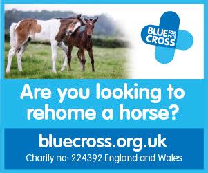 Blue Cross 2020 B (Lancashire Horse)